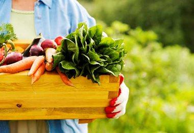 Como identificar produtos orgânicos em feiras e mercados?